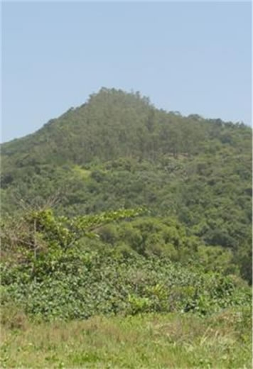 Figura 20. Vista do morro de São João. Notar no topo do morro uma mancha de eucaliptos.