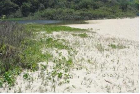 Figura 07. Vista de área de vegetação de dunas na Prainha Branca ao lado do lago, na praia.